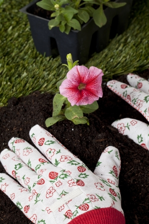 Closed up shot of a gardener's hand just finished planting a flower in the backyard Stock Photo - 17258738