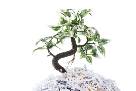 Tree growing from shredded papers on white background Stock Photo - 17258242