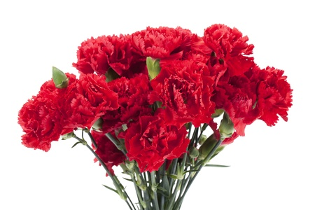Red peonies in a vertical image photo