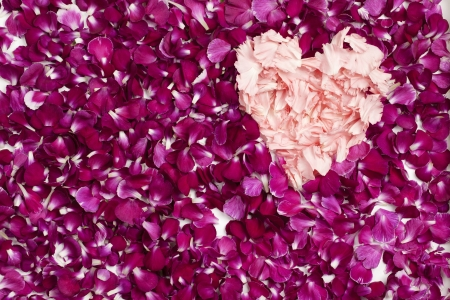 scattered in heart shaped: Heart shape made out of carnation petals against pink rose petals