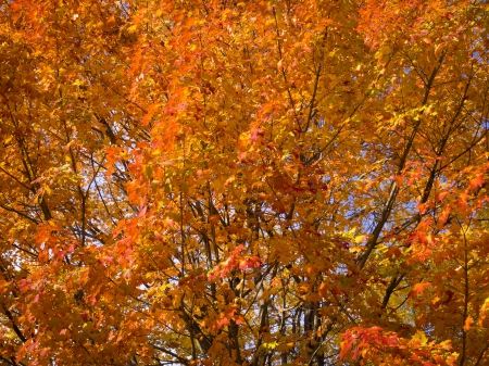 Image of autumn tree changing leaves Stock Photo - 17325947
