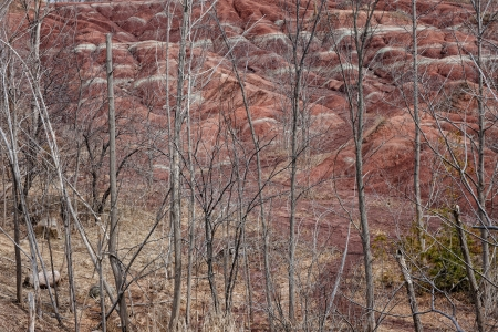 Empty trees cover the rolling hills in the badlands of Ontario Stock Photo - 17324286