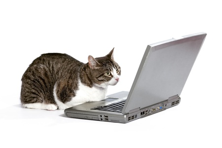 A cat sitting and looking at a laptop computer screen on a white background.