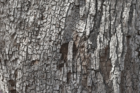 Extreme close-up full frame shot of peeled tree trunk. Stock Photo - 17339287