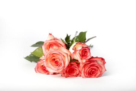 bunched: Rose rosa troppo ravvicinati e girato su una superficie bianca.