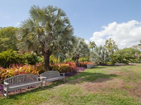 japenese: Un parque soleado con bancos en pares a lo largo del borde de la hierba verde largo, con naranjos y arbustos rojos al lado de grandes palmeras ubicadas en el Jard�n de Japenese Morikami, Florida, EE.UU..