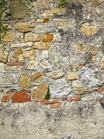 Small plants growing out of a stone wall Stock Photo - 17354578