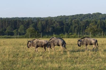 Shot van wilde dieren zwerven weiden in Roemenië.