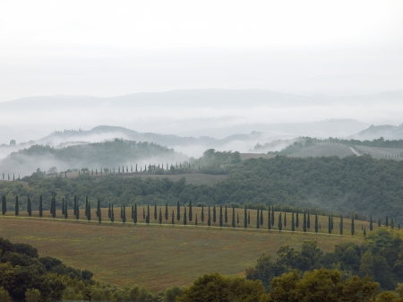 One cannot think of Tuscany Italy without thinking of the beautify and symbolic cypress tree so quintessential of the Italian landscape. photo