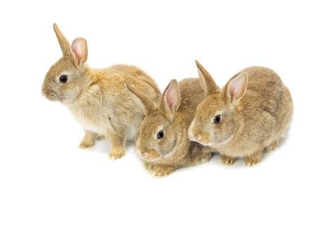 Three brown rabbits Imagens