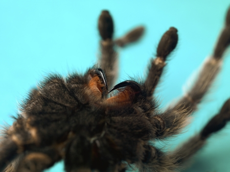 Cropped close-up shot of a tarantula. Stock Photo - 17494736