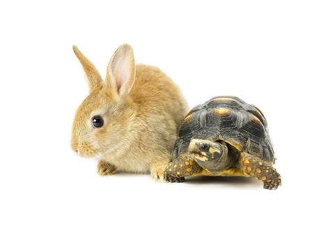 Cute rabbit with turtle isolated on white background photo