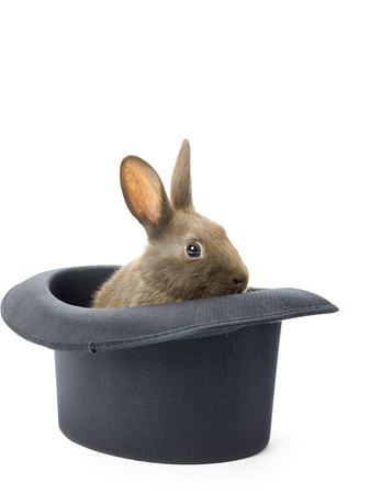 side viewing: Rabbit glancing inside the magic hat Stock Photo