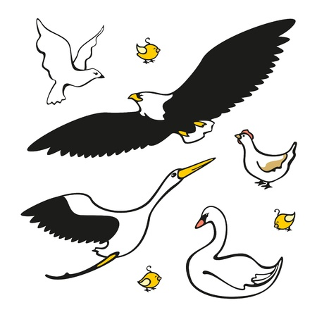 Set of images of birds Vector