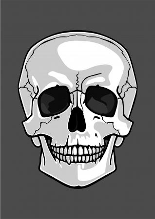 Illustrazione di un cranio isolato su grigio