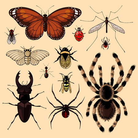spider: Set of realistic images of insects Illustration