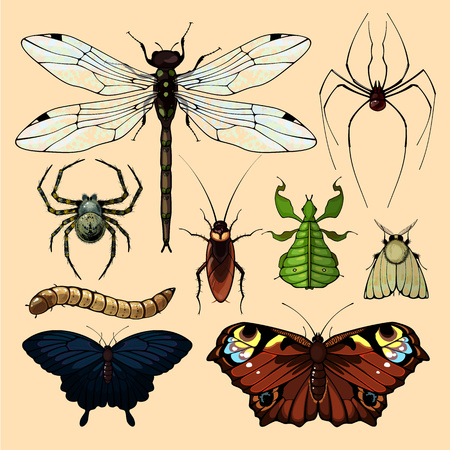 lepidoptera: Realistic images of insects, set 2