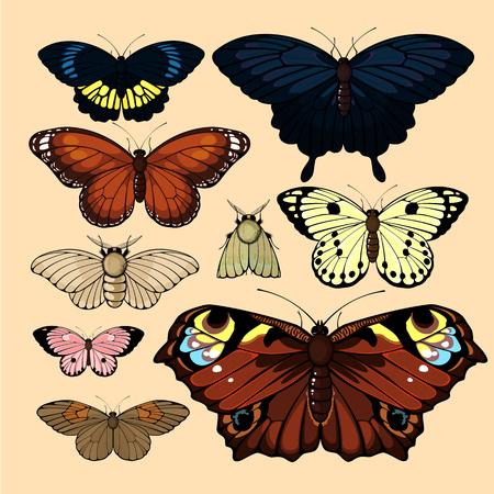 Butterflies and moths Vector