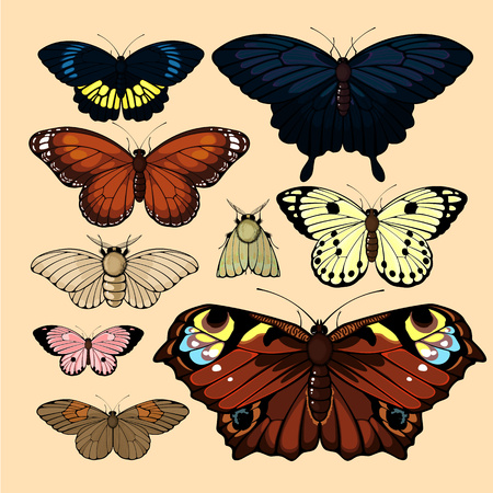 Butterflies and moths Illustration
