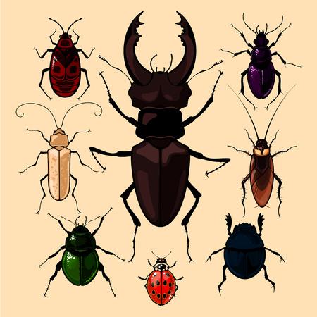 escarabajo: Conjunto de imágenes realistas de los insectos, aislado en fondo neutro