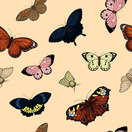 mosca caricatura: Patr?n sin fisuras con las mariposas
