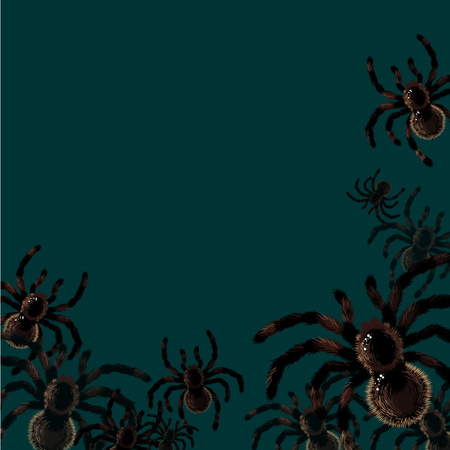 spiders: Background with spiders