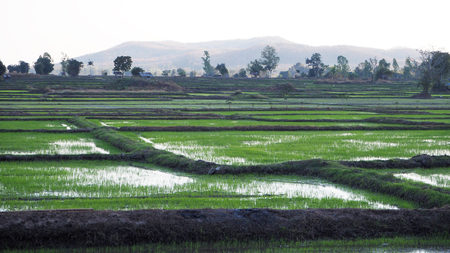 rural areas: Rice field and huts in rural areas