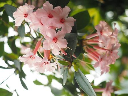 aisa: Flower