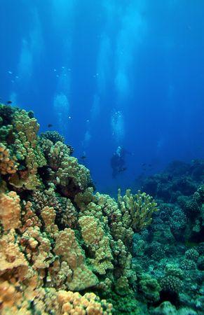 Scuba Divers swimming towards the reef in Molokini Hawaii Stock Photo - 2772469