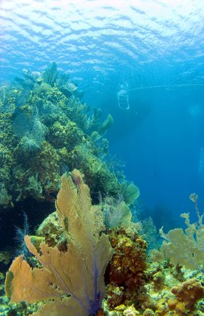 brac: Cayman Brac Reef with dive boat in the background Stock Photo