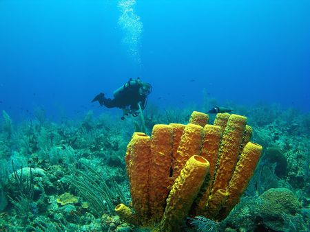 Scuba Diver and Yellow Tube Sponge in Cayman Brac Stock Photo - 3169004