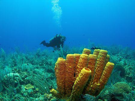 Scuba Diver and Yellow Tube Sponge in Cayman Brac Stock Photo - 3169004