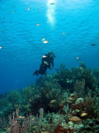 brac: Scuba Diver looking upward while diving in Cayman Brac
