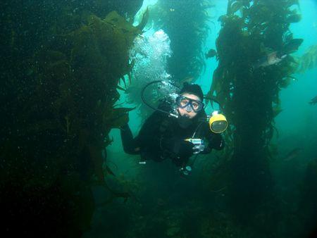 alga marina: Fot�grafo submarino a trav�s de la nataci�n en Kelp Catalina Foto de archivo