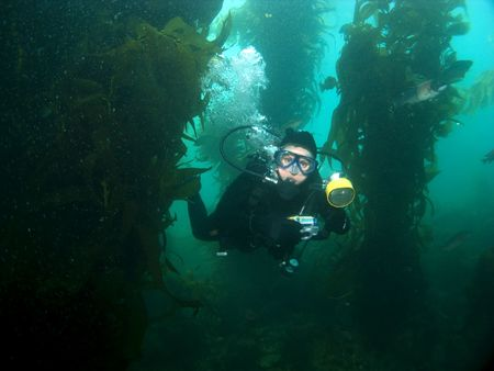 Underwater Photographer swimming through the Kelp in Catalina photo