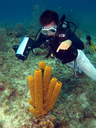 cayman islands: Dive Master pointing at a Sea Sponge in the Cayman Islands