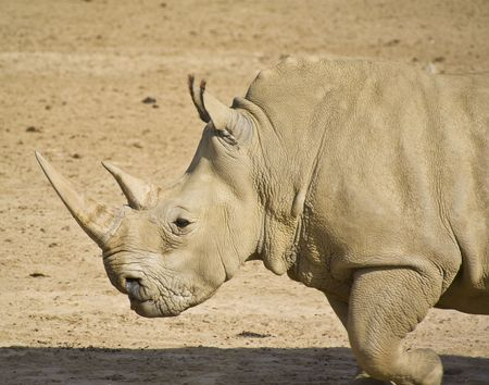 investigative: Rhinoceros taken from the side Stock Photo