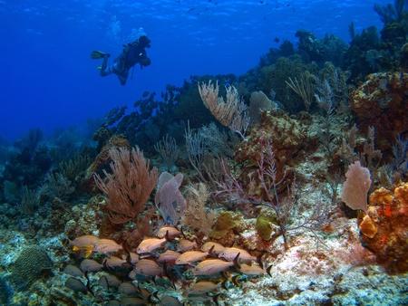 Dive Master op een rif in Cayman Brac