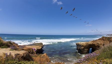 shorelines: Sunset Cliffs with Pelicans in San Diego