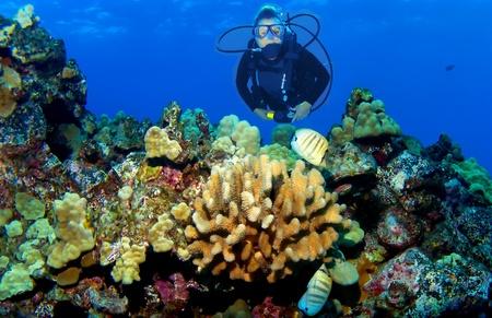 kona: Kona Reef Scene