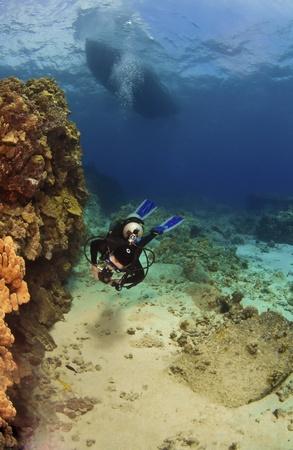 kona: Scuba Diver exploring a reef in Kona Hawaii Stock Photo