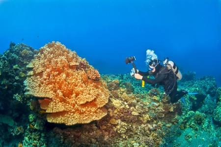 kona: Diver photographing Mushroom Coral in Kona Hawaii