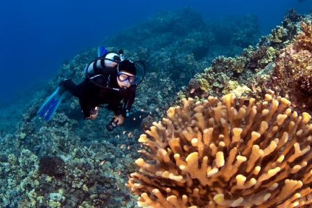 kona: Diver looking at the Coral in Kona Hawaii