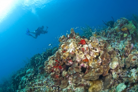 st lucia:  Photographer taking pictures on a St Lucia reef