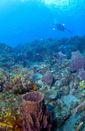 st lucia: Underwater Photographer lighting up a St Lucia reef while shooting Stock Photo