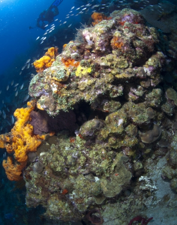 st lucia: A coral formation on a reef in St  Lucia Stock Photo