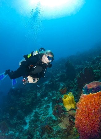 st lucia: Diver looking at Sponges on a coral reef in St Lucia