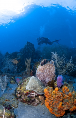 st lucia: Underwater Photographer in St Lucia shooting on a coral reef