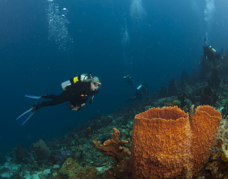 st lucia: A Scuba Diver checks out the sponges in St. Lucia Stock Photo