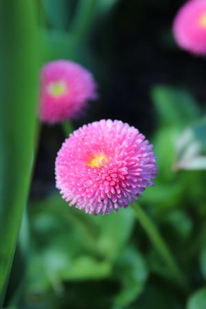 Spring Blooms Reklamní fotografie